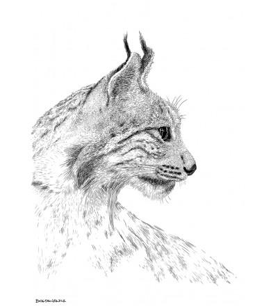 Obraz LYNX ONWALL - czarno-biały, 50x70cm