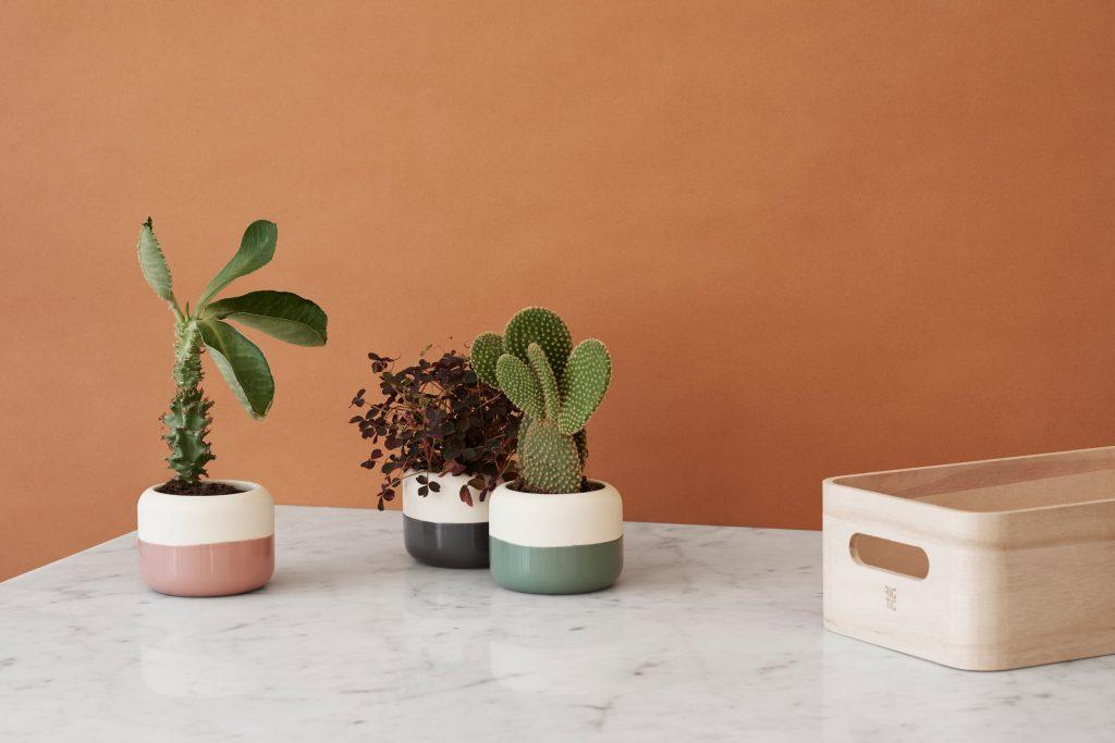 Rośliny w domu po skandynawsku