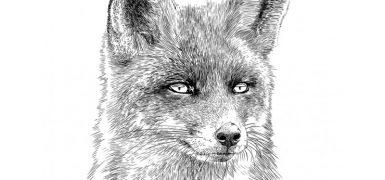 obraz-fox-onwall-czarno-bialy-50x70cm1